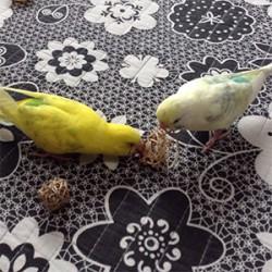 鳥フォトコンテスト「ぱうえる・ロペ」さん