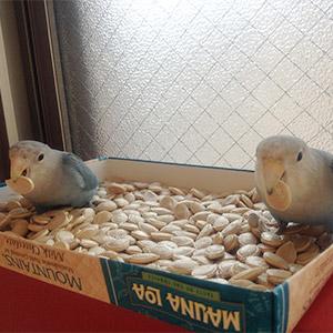 鳥フォトコンテスト「シロちゃん・ゴロちゃん」さん
