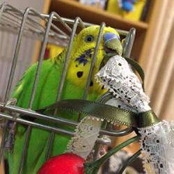 鳥フォトコンテスト「スコスコ スーパークスクス」さん
