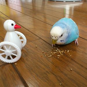 鳥フォトコンテスト「葵」さん