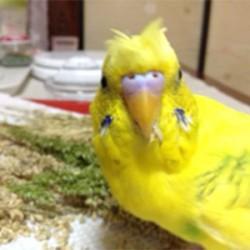 鳥フォトコンテスト「ひな」さん