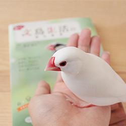 楽しい文鳥生活のはじめ方が発売されました♪