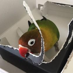 鳥フォトコンテスト「ルイ」さん