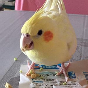 鳥フォトコンテスト「かな」さん