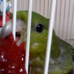 鳥フォトコンテスト「きみぴよ」さん