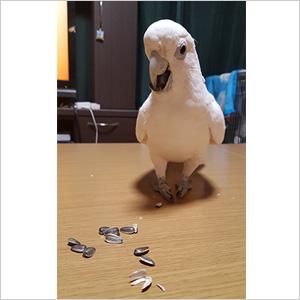鳥フォトコンテスト「のりぽん」さん