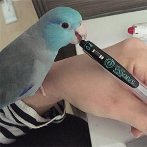 マメルリハ まめ 鳥フォトコンテストvol.025 テーマ「ガジガジ」結果発表