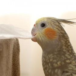 鳥フォトコンテスト「いと」さん