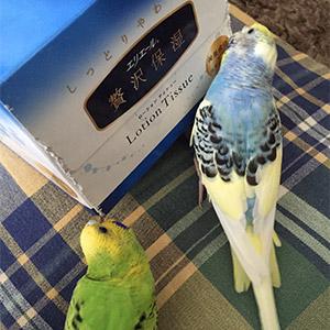 鳥フォトコンテスト「カレー・ずんだ」さん