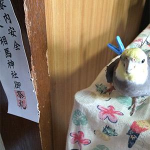オカメインコ ぴーちゃん 鳥フォトコンテストvol.025 テーマ「ガジガジ」結果発表