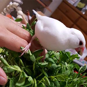 鳥フォトコンテスト「ユキちゃん」さん