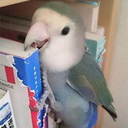鳥フォトコンテスト「ソーダ」さん