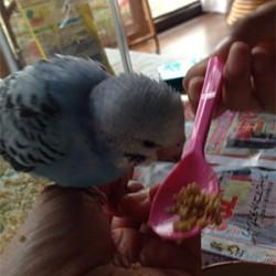 鳥フォトコンテスト「ゆづちゃん」さん