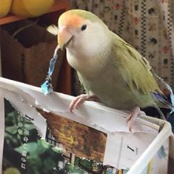 鳥フォトコンテスト「マロ」さん