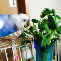 鳥フォトコンテスト「とっちゃん」さん