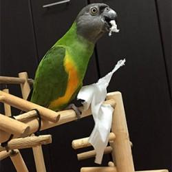 鳥フォトコンテスト「しん」さん