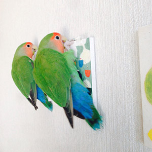 鳥フォトコンテスト「よもぎ・もえぎ」さん