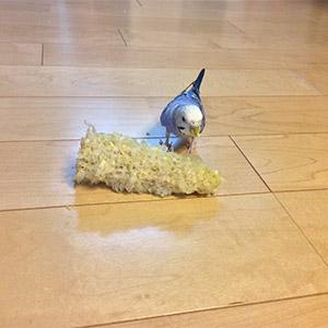 鳥フォトコンテスト「ピーチ」さん