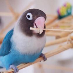 鳥フォトコンテスト「キョロタン」さん