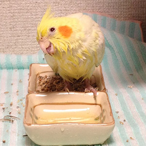 鳥フォトコンテスト「ぴろちゃん」さん