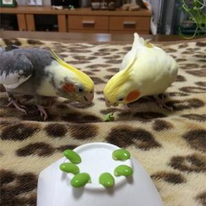 鳥フォトコンテスト「朔・モカ」さん