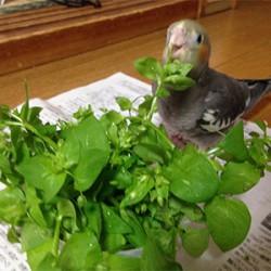 鳥フォトコンテスト「ペコちゃん」さん