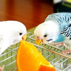 鳥フォトコンテスト「らんちゃん・ちゃちゃ」さん