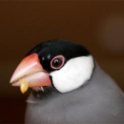 鳥フォトコンテスト「ジュグル」さん