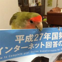 鳥フォトコンテスト「こはる」さん