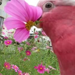 鳥フォトコンテスト「梅ちゃん」さん