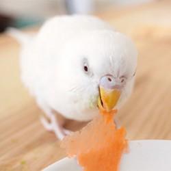 鳥フォトコンテスト「ばなな」さん
