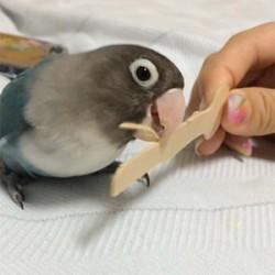 鳥フォトコンテスト「らぴ」さん