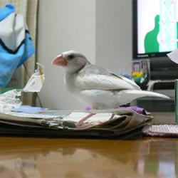 鳥フォトコンテスト「ちゅろ」さん