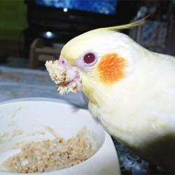 鳥フォトコンテスト「八代目ちび」さん