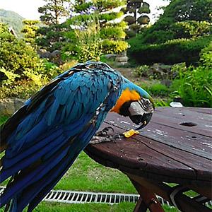 鳥フォトコンテスト「柳」さん