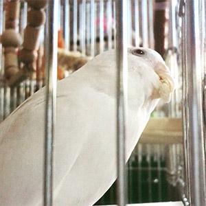鳥フォトコンテスト「きみちゃん」さん