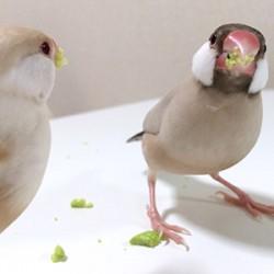 鳥フォトコンテスト「ゆべし」さん