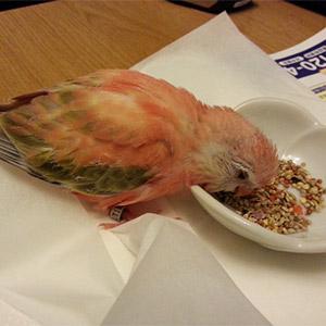鳥フォトコンテスト「あらちゃん」さん