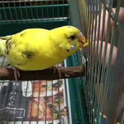 鳥フォトコンテスト「テンテン」さん