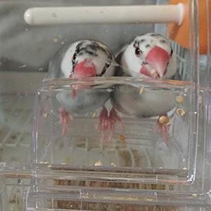 鳥フォトコンテスト「ちろる・ちょこ」さん