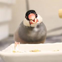 鳥フォトコンテスト「春蘭」さん
