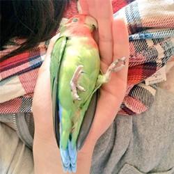 鳥フォトコンテスト「あんず」さん