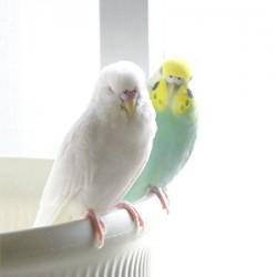 鳥フォトコンテスト「オコメ・トト」さん