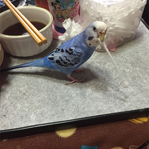 鳥フォトコンテスト「くれよん」さん