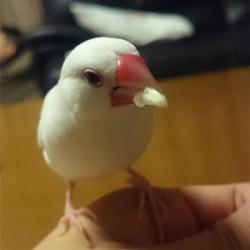 鳥フォトコンテスト「みるく」さん