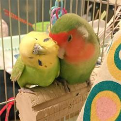 鳥フォトコンテスト「けろっぴー・あんず」さん