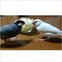 鳥フォトコンテスト「あずき・みるく」さん