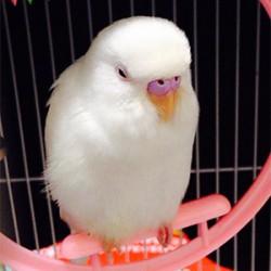 鳥フォトコンテスト「ぽっぽ」さん