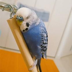 鳥フォトコンテスト「ミント」さん