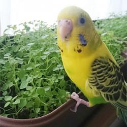 鳥フォトコンテスト「ピーコ」さん
